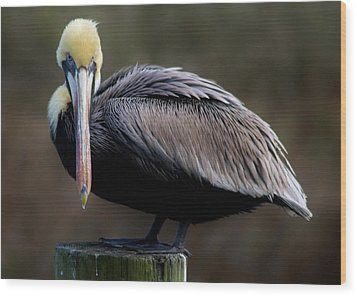 Pelican  Wood Print by Paulette Thomas