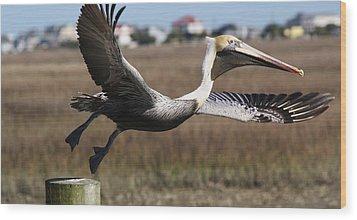 Pelican Take Off Wood Print by Paulette Thomas