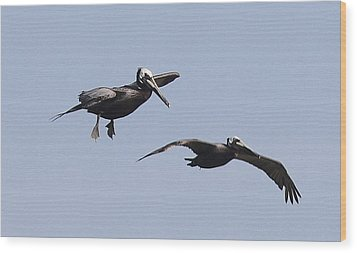 Pelicans In Flight 2 Wood Print by Cathy Lindsey