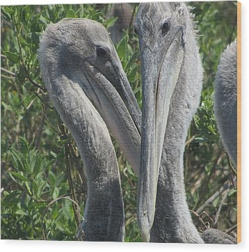 Pelicans Of Beacon Island Wood Print by Cathy Lindsey