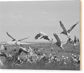 Pelicans Wood Print by Thomas Leon
