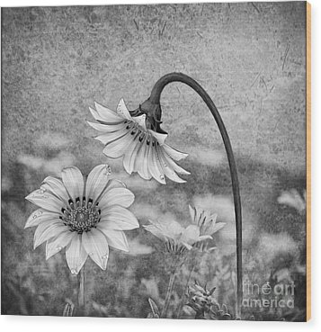 Wood Print featuring the digital art Peruvian Daisy Garden by Shirley Mangini