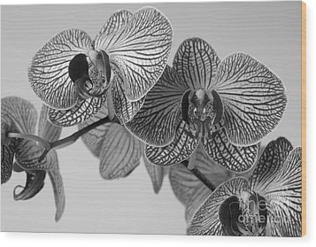 Phalaenopsis Orchid Wood Print by Dariusz Gudowicz
