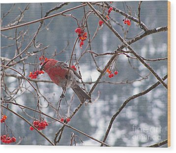 Pine Grosbeak And Mountain Ash Wood Print by Leone Lund