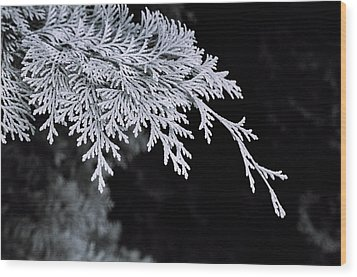 Pine Needles Wood Print by Christopher Lugenbeal