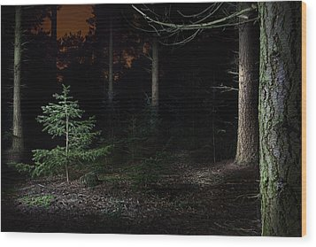 Pine Trees New Life Wood Print by Dirk Ercken