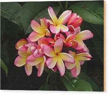 Pink And Yellow Plumeria Wood Print by Karen Nicholson