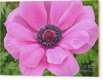 Wood Print featuring the photograph Pink Flower by Jeannie Rhode