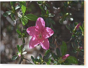 Wood Print featuring the photograph Pink Flower by Tara Potts