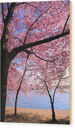 Pink Wood Print by Mitch Cat