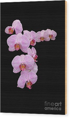 Pink Orchids Wood Print by Tom Prendergast