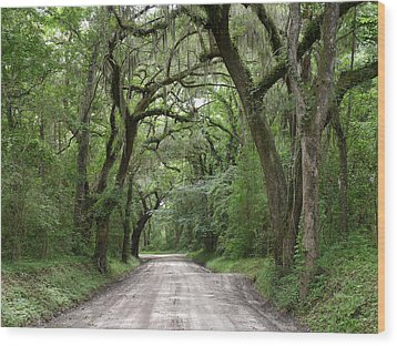 Plantation Road II Wood Print