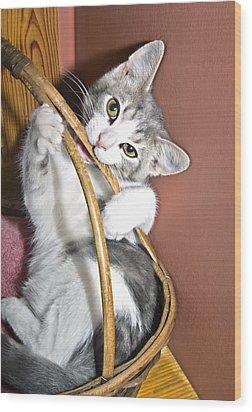 Playful Kitten Wood Print by Susan Leggett