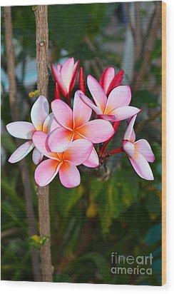 Plumeria Wood Print by Eva Kaufman