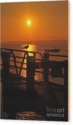 Plymouth Harbor Sunrise Wood Print by Catherine Reusch  Daley