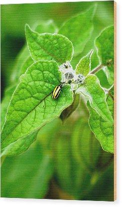 Poha Berry Beetle Wood Print by Lehua Pekelo-Stearns