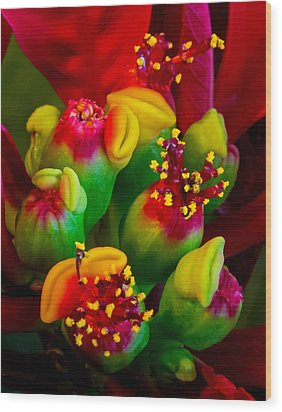 Poinsettia Flowers Wood Print