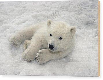 Polar Bear Cub Playing In Snow Alaska Wood Print by Mark Newman