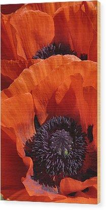 Poppies Wood Print by Debra Collins