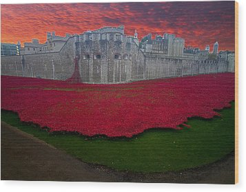 Poppies Tower Of London Wood Print