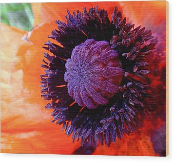 Poppy Wood Print by Rona Black