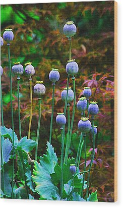 Poppy Seed Pods Wood Print