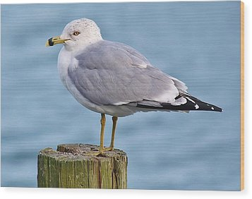 Pretty Sea Gull Wood Print by Paulette Thomas