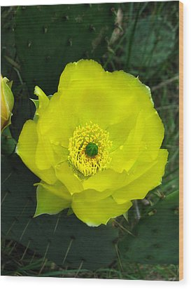 Wood Print featuring the photograph Prickly Pear Cactus by William Tanneberger