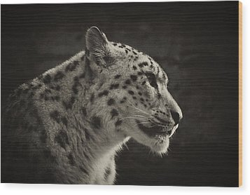Wood Print featuring the photograph Profile Of A Snow Leopard by Chris Boulton