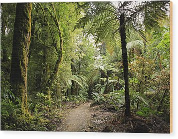 Pureora Forest Wood Print by Les Cunliffe