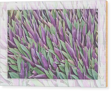 Wood Print featuring the photograph Purple And Green by Holly Kempe