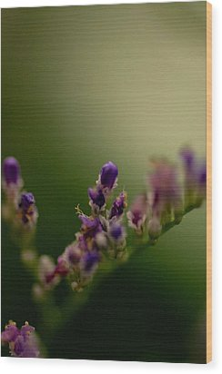 Purple Bud Wood Print