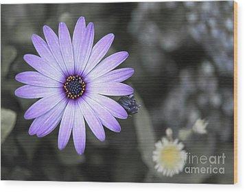 Purple Daisy Wood Print by Design Windmill