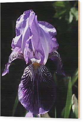 Purple Majesty Wood Print by Bruce Bley