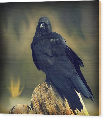 Wood Print featuring the photograph Raven by Yulia Kazansky