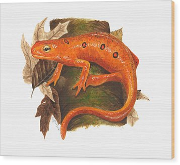 Red Eft Wood Print by Cindy Hitchcock