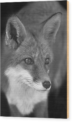 Wood Print featuring the photograph Red Fox  by Brian Cross
