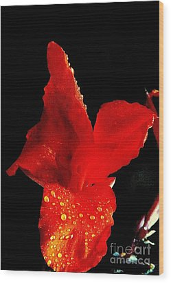 Red Hot Canna Lilly Wood Print by Michael Hoard