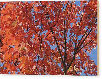 Red Leaves Of Autumn Wood Print by David Birchall