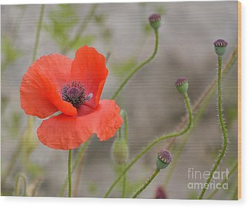 Wood Print featuring the photograph Red by Lisa L Silva