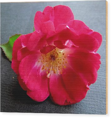 Red Rose Wood Print by Joyce Woodhouse