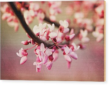 Wood Print featuring the photograph Redbud Blossoms by Trina  Ansel