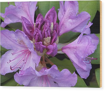 Wood Print featuring the photograph Rhododendron by Gene Cyr