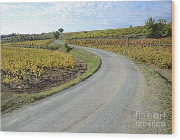 Road By Vineyards With Fall Foliage Wood Print by Sami Sarkis
