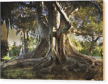 Roots Wood Print by George Lenz