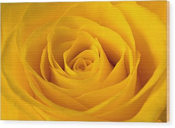 Rose Wood Print by Scott Carruthers