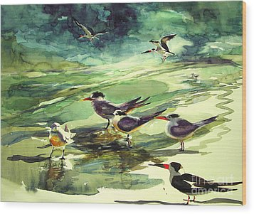 Royal Terns And Black Skimmers Wood Print by Julianne Felton