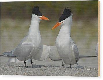 Royal Terns Wood Print by James Petersen