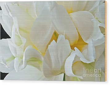 Wood Print featuring the photograph Ruffled White Tulip by Art Barker