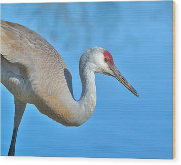 Sandhill Crane Wood Print by Kathy King